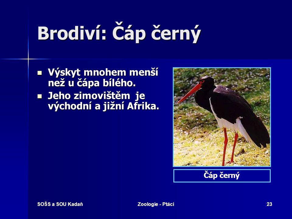 SOŠS a SOU KadaňZoologie - Ptáci23 Brodiví: Čáp černý Výskyt mnohem menší než u čápa bílého.
