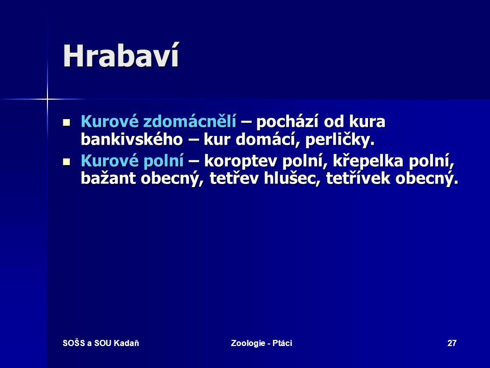 SOŠS a SOU KadaňZoologie - Ptáci27 Hrabaví Kurové zdomácnělí – pochází od kura bankivského – kur domácí, perličky.