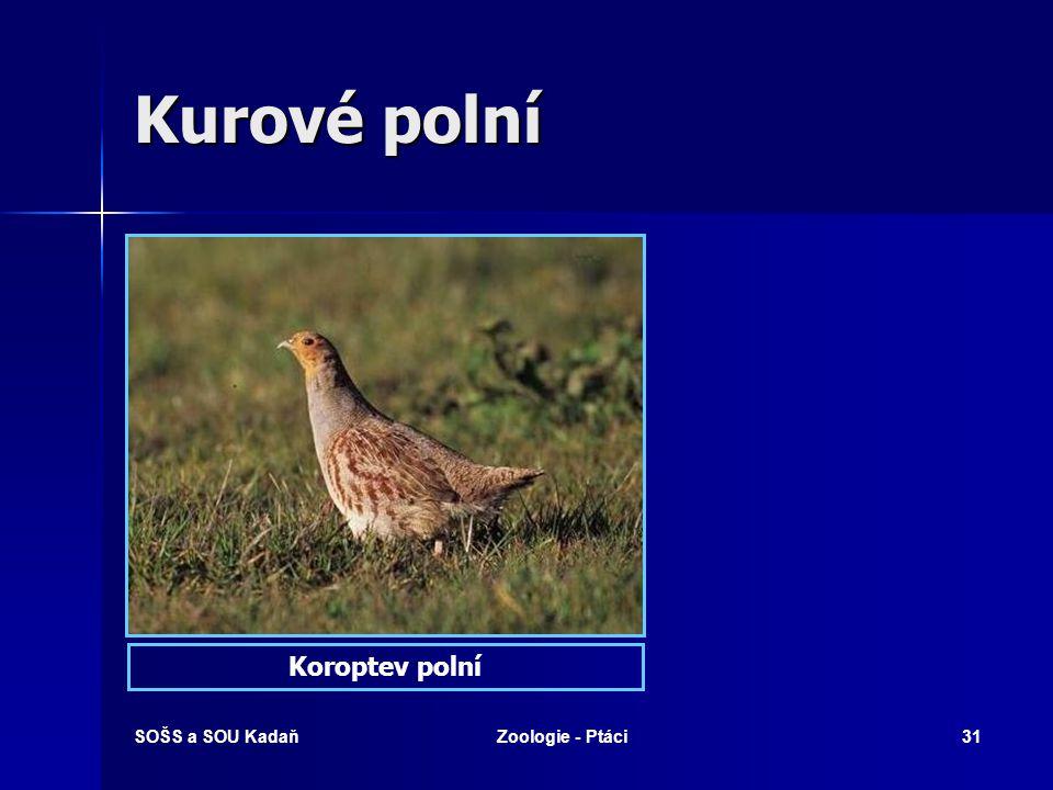 SOŠS a SOU KadaňZoologie - Ptáci31 Kurové polní Koroptev polní
