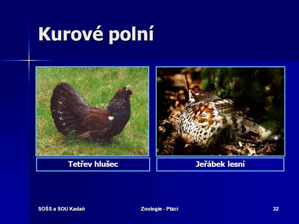 SOŠS a SOU KadaňZoologie - Ptáci32 Kurové polní Jeřábek lesníTetřev hlušec