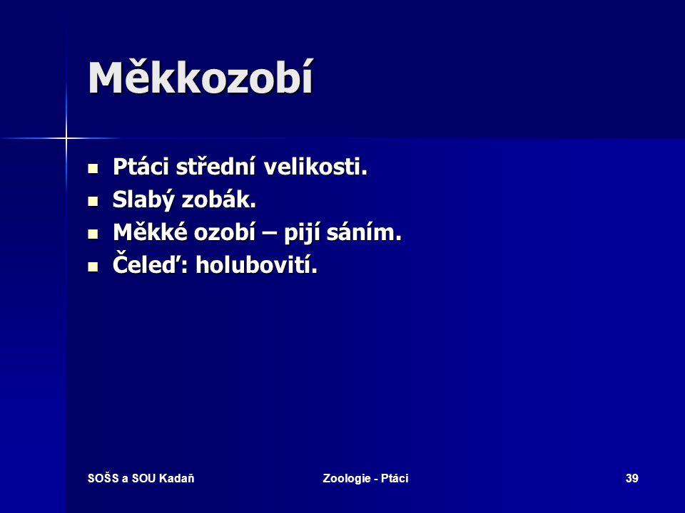 SOŠS a SOU KadaňZoologie - Ptáci39 Měkkozobí Ptáci střední velikosti.