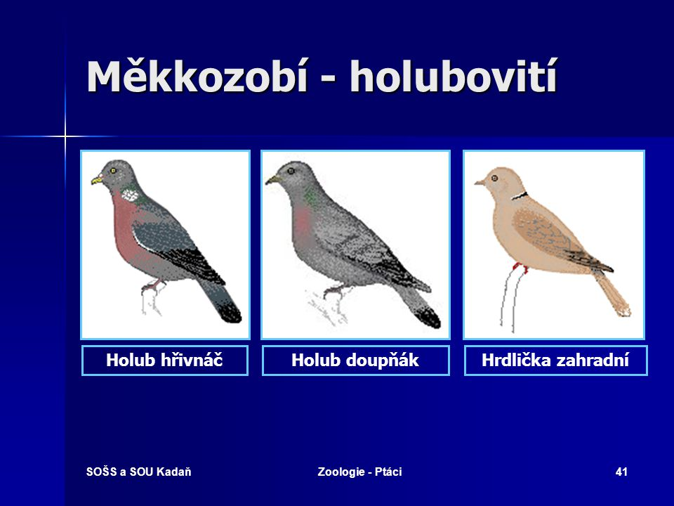 SOŠS a SOU KadaňZoologie - Ptáci41 Měkkozobí - holubovití Holub hřivnáčHolub doupňákHrdlička zahradní