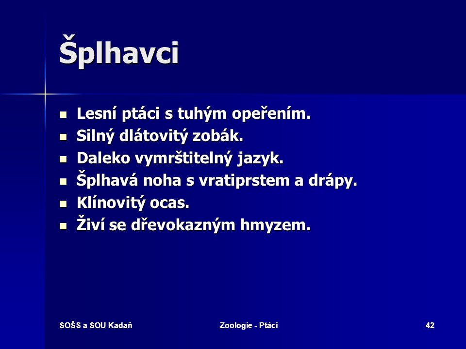 SOŠS a SOU KadaňZoologie - Ptáci42 Šplhavci Lesní ptáci s tuhým opeřením.