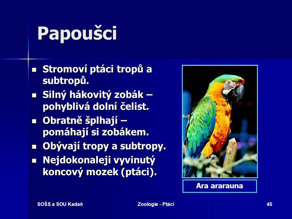 SOŠS a SOU KadaňZoologie - Ptáci45 Papoušci Stromoví ptáci tropů a subtropů.