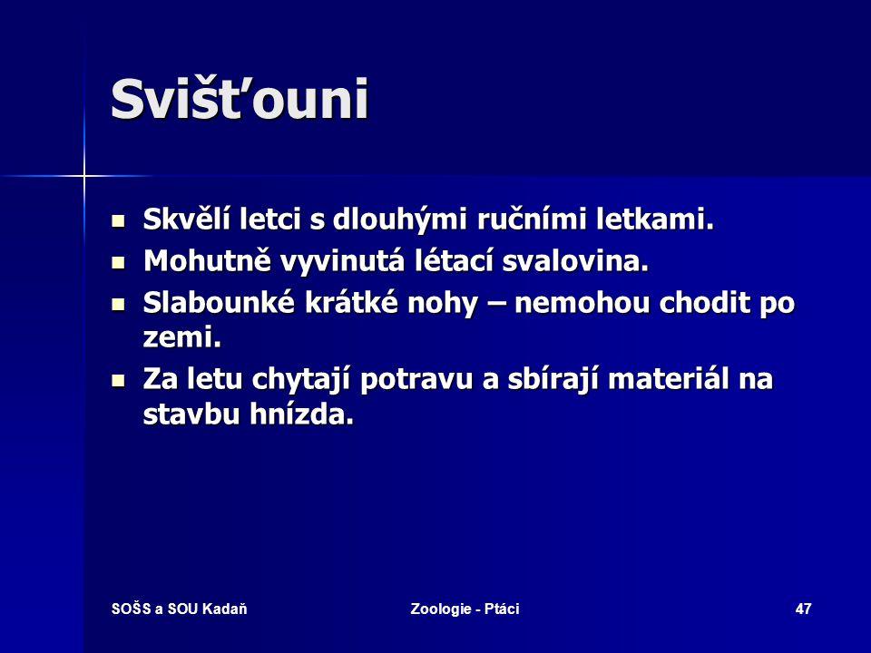 SOŠS a SOU KadaňZoologie - Ptáci47 Svišťouni Skvělí letci s dlouhými ručními letkami.
