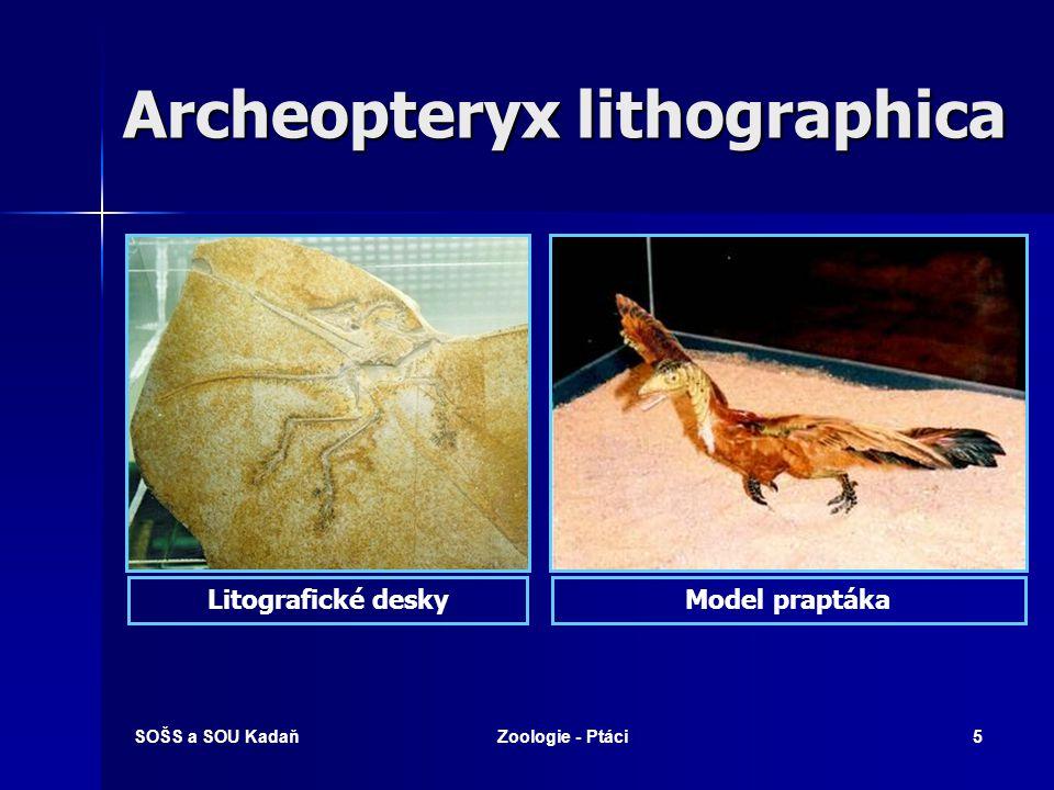 SOŠS a SOU KadaňZoologie - Ptáci5 Archeopteryx lithographica Litografické deskyModel praptáka
