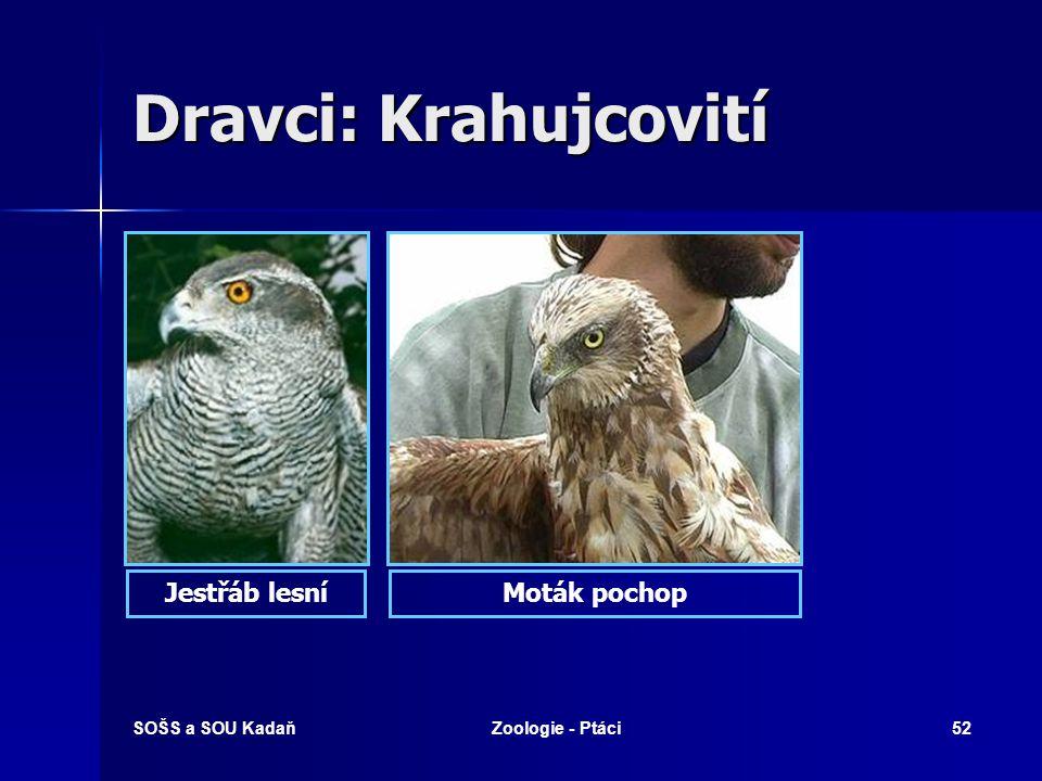 SOŠS a SOU KadaňZoologie - Ptáci52 Dravci: Krahujcovití Jestřáb lesníMoták pochop