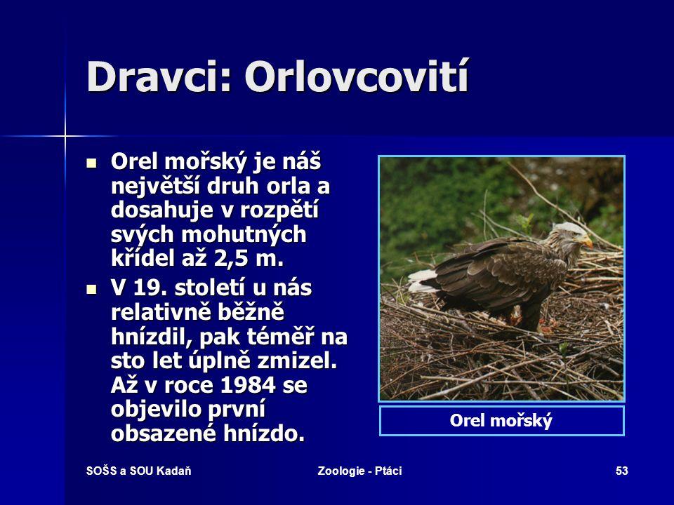 SOŠS a SOU KadaňZoologie - Ptáci53 Dravci: Orlovcovití Orel mořský je náš největší druh orla a dosahuje v rozpětí svých mohutných křídel až 2,5 m.