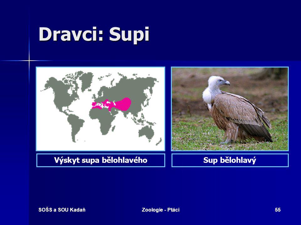 SOŠS a SOU KadaňZoologie - Ptáci55 Dravci: Supi Sup bělohlavýVýskyt supa bělohlavého