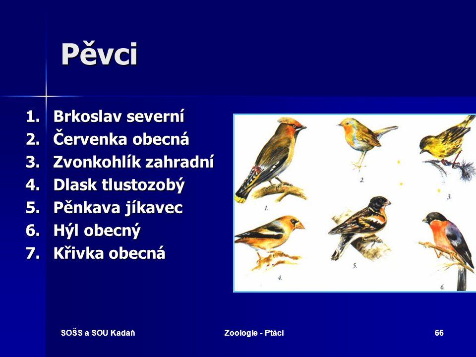 SOŠS a SOU KadaňZoologie - Ptáci66 Pěvci 1.Brkoslav severní 2.