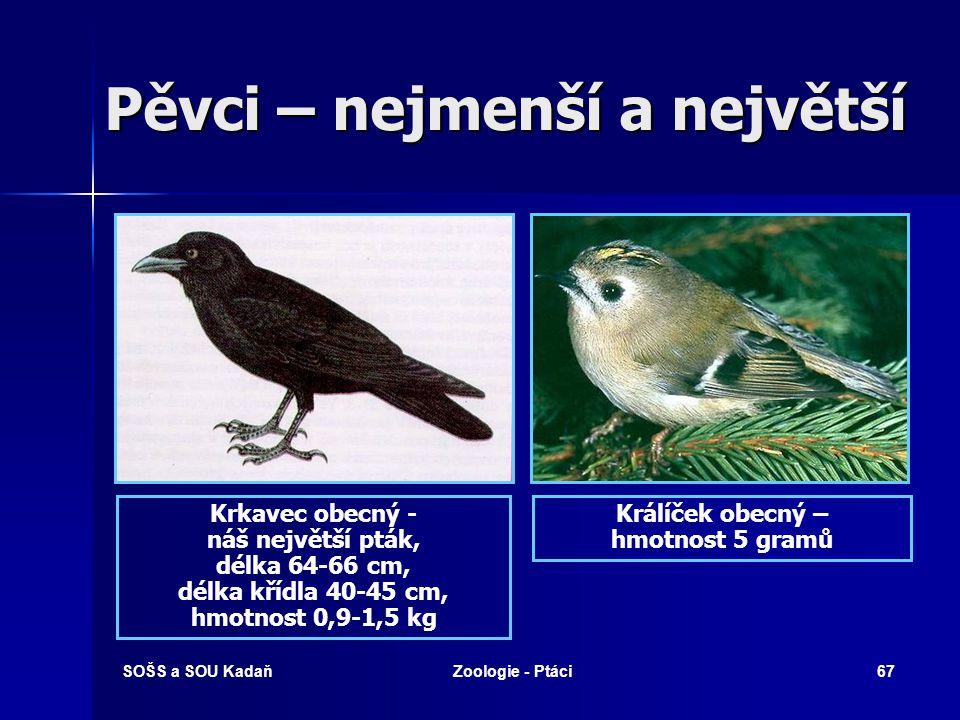 SOŠS a SOU KadaňZoologie - Ptáci67 Pěvci – nejmenší a největší Krkavec obecný - náš největší pták, délka 64-66 cm, délka křídla 40-45 cm, hmotnost 0,9-1,5 kg Králíček obecný – hmotnost 5 gramů