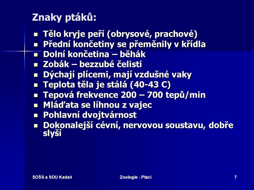 SOŠS a SOU KadaňZoologie - Ptáci58 Sovy Zavalité tělo, kryté krátkým hustým peřím.