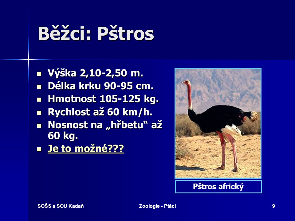 SOŠS a SOU KadaňZoologie - Ptáci9 Běžci: Pštros Výška 2,10-2,50 m.