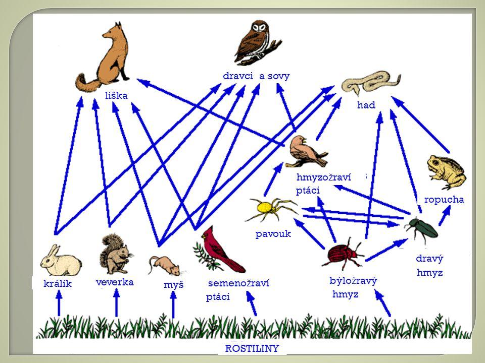 králík veverka myš semeno ž raví ptáci ROSTILINY býlo ž ravý hmyz dravý hmyz ropucha pavouk hmyzo ž raví ptáci had dravci a sovy liška