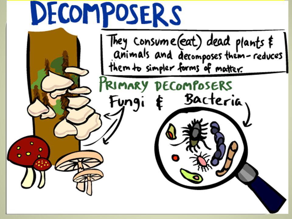 ROZKLADA Č je organismus, který jako potravu vyu ž ívá zbytky mrtvých t ě l rostlin a ž ivo č ich ů i jejich výkal ů, a rozkládá je na jednodušší látky, tzv.