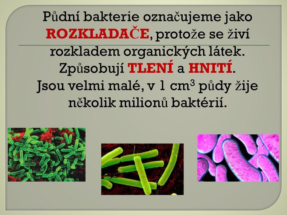 P ů dní bakterie ozna č ujeme jako ROZKLADA Č E, proto ž e se ž iví rozkladem organických látek.