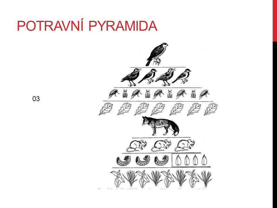 POTRAVNÍ PYRAMIDA 03