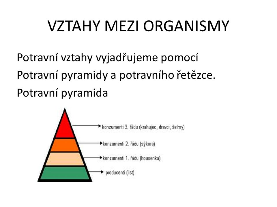 VZTAHY MEZI ORGANISMY Potravní vztahy vyjadřujeme pomocí Potravní pyramidy a potravního řetězce. Potravní pyramida