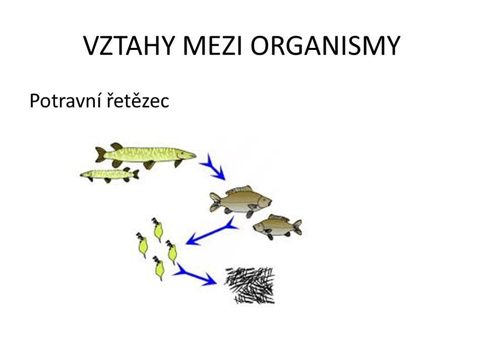 VZTAHY MEZI ORGANISMY Domácí úkol: za pomoci prezentace a učebnice vytvoř: a)Jednoduchou potravní pyramidu s třemi druhy organismů b)Potravní řetězec s pěti druhy organismů