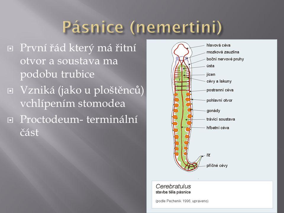  První řád který má řitní otvor a soustava ma podobu trubice  Vzniká (jako u ploštěnců) vchlípením stomodea  Proctodeum- terminální část