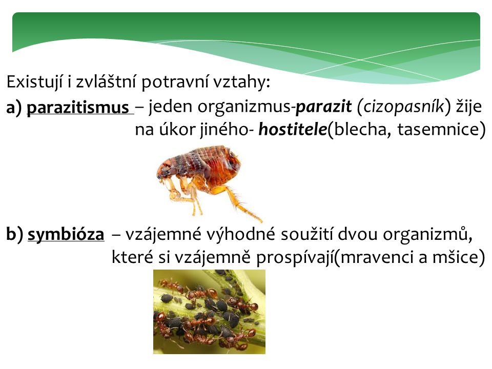 Existují i zvláštní potravní vztahy: a) parazitismus – jeden organizmus-parazit (cizopasník) žije na úkor jiného- hostitele(blecha, tasemnice) b) symb