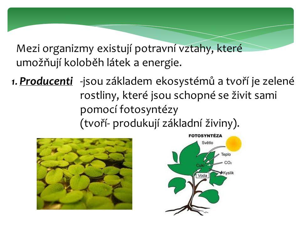 Mezi organizmy existují potravní vztahy, které umožňují koloběh látek a energie. 1. Producenti-jsou základem ekosystémů a tvoří je zelené rostliny, kt