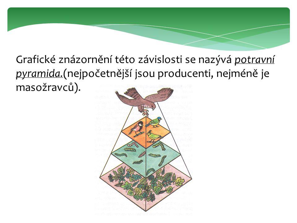 Grafické znázornění této závislosti se nazývá potravní pyramida.(nejpočetnější jsou producenti, nejméně je masožravců).