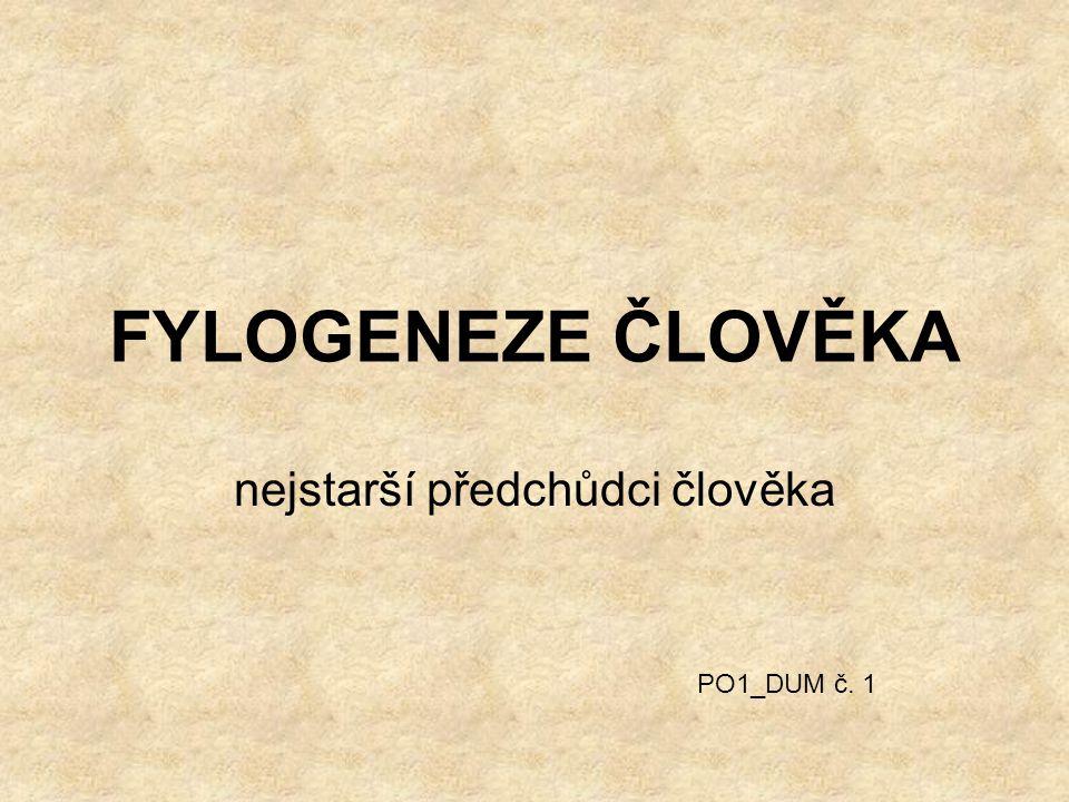 FYLOGENEZE ČLOVĚKA nejstarší předchůdci člověka PO1_DUM č. 1