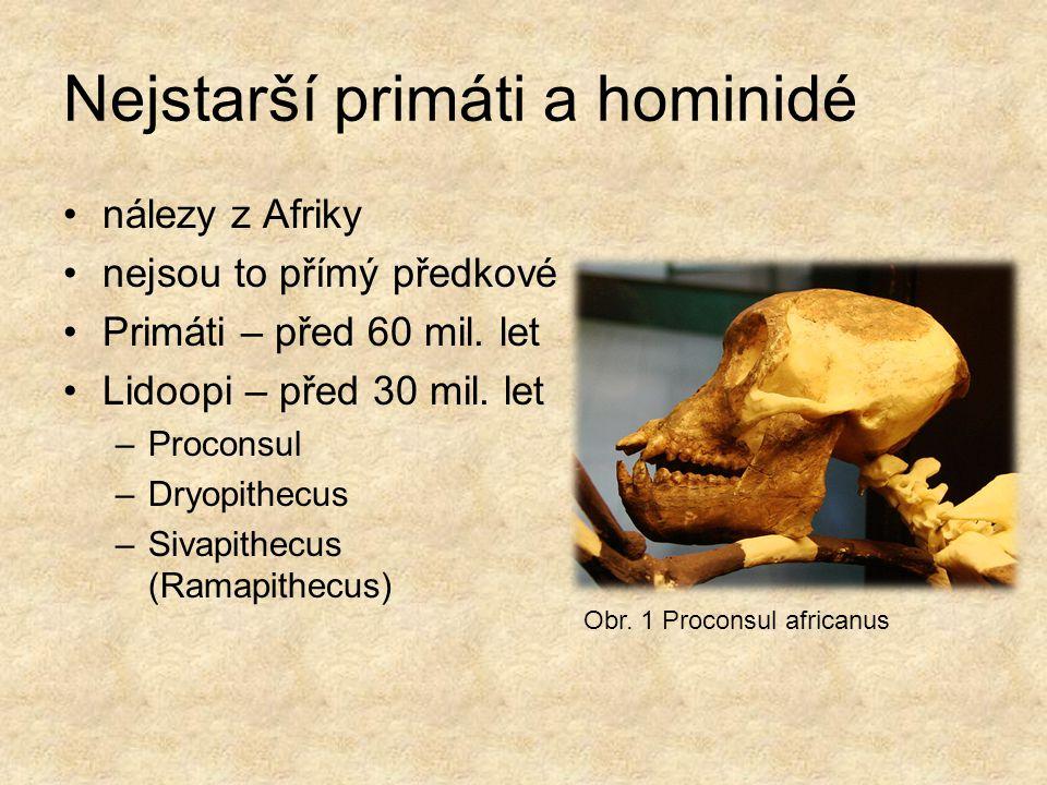 Nejstarší primáti a hominidé nálezy z Afriky nejsou to přímý předkové Primáti – před 60 mil. let Lidoopi – před 30 mil. let –Proconsul –Dryopithecus –