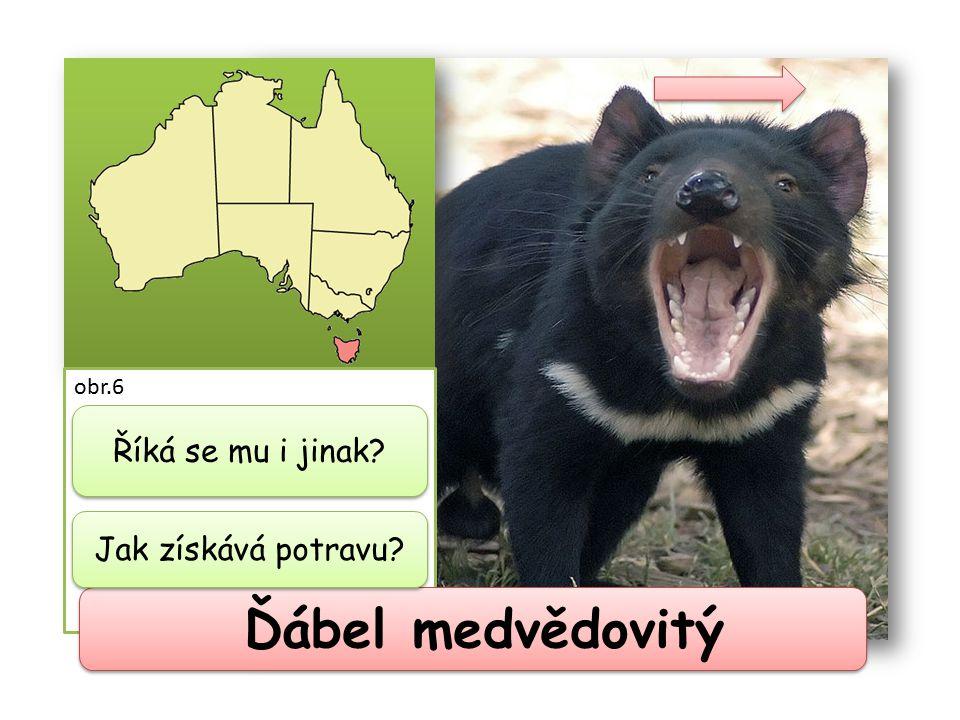 Ďábel medvědovitý obr.6 jinak také tasmánský čert dravec a mrchožrout Říká se mu i jinak? Jak získává potravu?