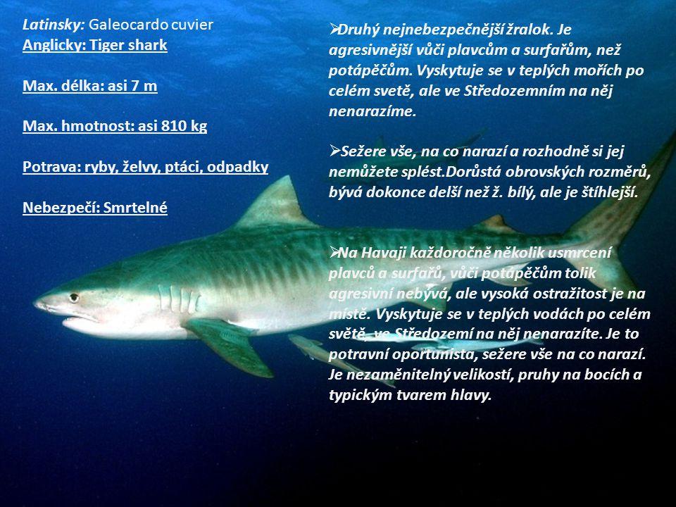  Druhý nejnebezpečnější žralok. Je agresivnější vůči plavcům a surfařům, než potápěčům. Vyskytuje se v teplých mořích po celém svetě, ale ve Středoze