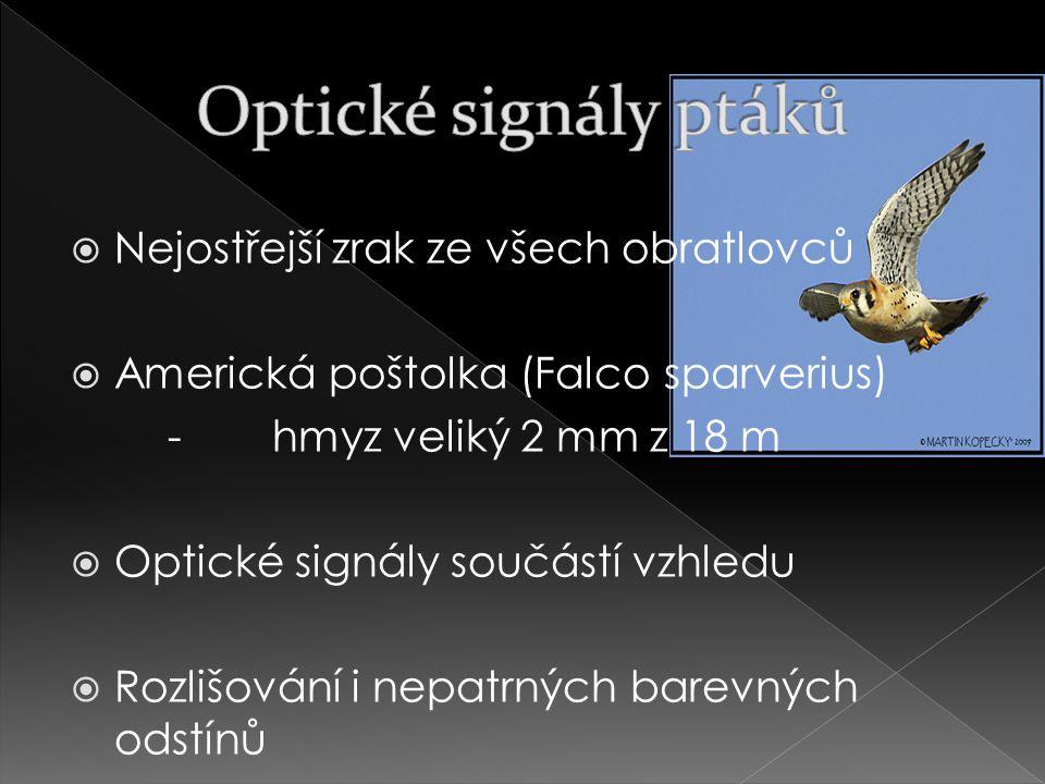  Nejostřejší zrak ze všech obratlovců  Americká poštolka (Falco sparverius) -hmyz veliký 2 mm z 18 m  Optické signály součástí vzhledu  Rozlišování i nepatrných barevných odstínů