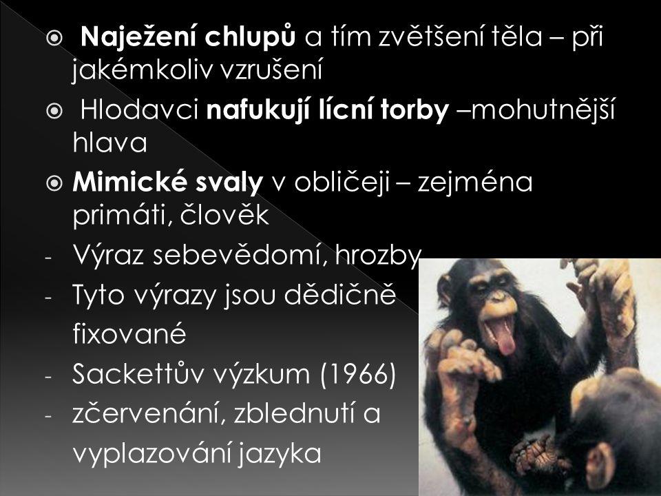  Naježení chlupů a tím zvětšení těla – při jakémkoliv vzrušení  Hlodavci nafukují lícní torby –mohutnější hlava  Mimické svaly v obličeji – zejména primáti, člověk - Výraz sebevědomí, hrozby - Tyto výrazy jsou dědičně fixované - Sackettův výzkum (1966) - zčervenání, zblednutí a vyplazování jazyka