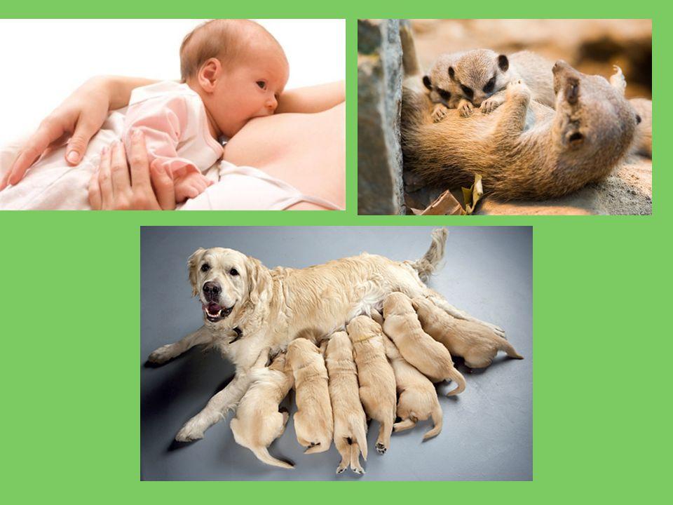  Potravní chování- vnitřní podmět (hlad) - přijímání potravy - manipulace s potravou ( krmení mláďat, vytváření zásob, žvýkání) - přijímání vody - vyprazdňování