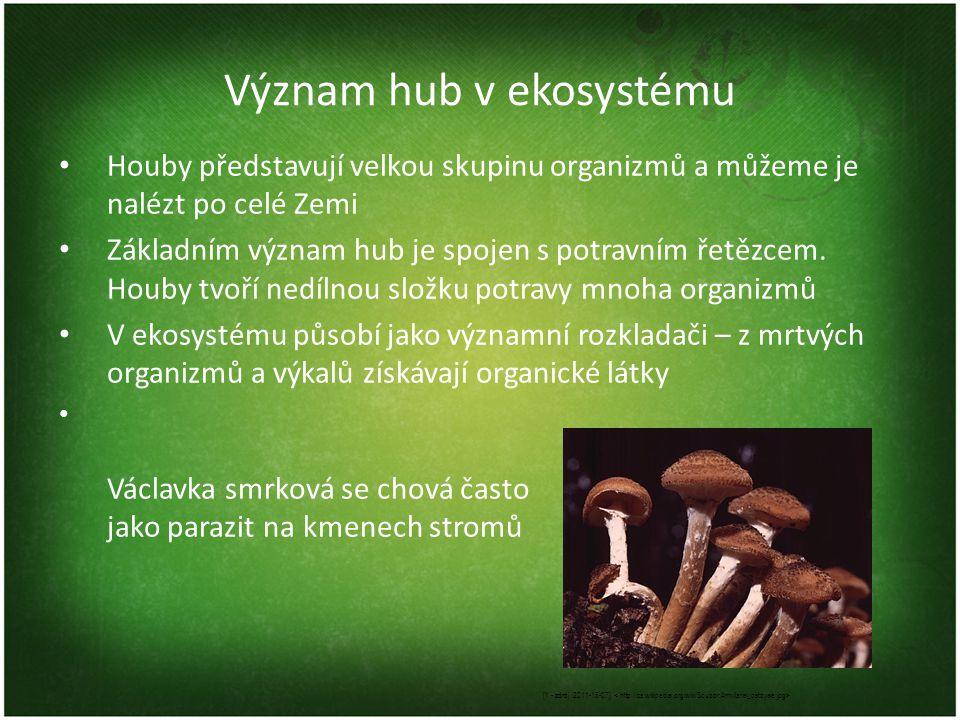 Význam hub v ekosystému Houby představují velkou skupinu organizmů a můžeme je nalézt po celé Zemi Základním význam hub je spojen s potravním řetězcem