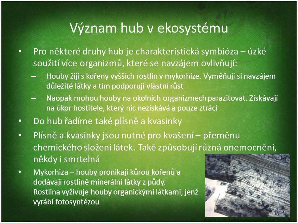 Význam hub v ekosystému Pro některé druhy hub je charakteristická symbióza – úzké soužití více organizmů, které se navzájem ovlivňují: – Houby žijí s