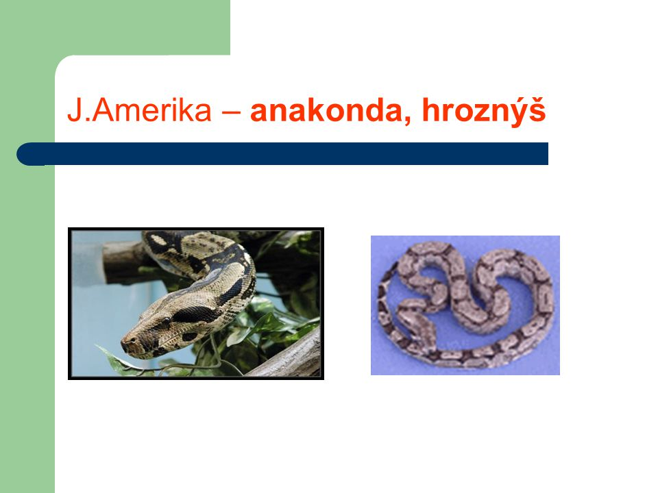 J.Amerika – anakonda, hroznýš