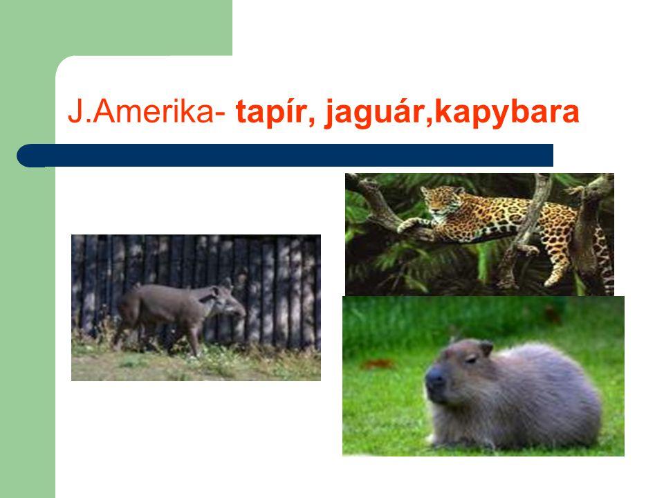J.Amerika- tapír, jaguár,kapybara