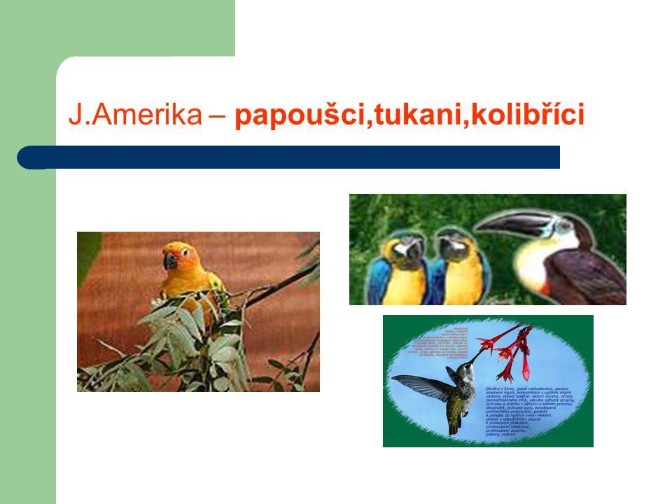 J.Amerika – papoušci,tukani,kolibříci