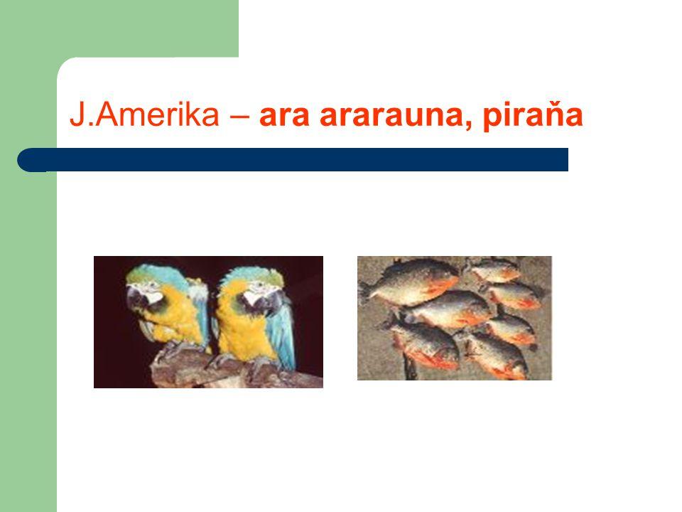 J.Amerika – ara ararauna, piraňa