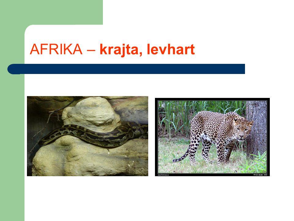 AFRIKA – krajta, levhart