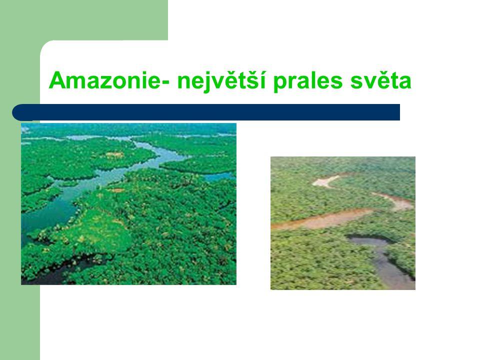 Amazonie- největší prales světa