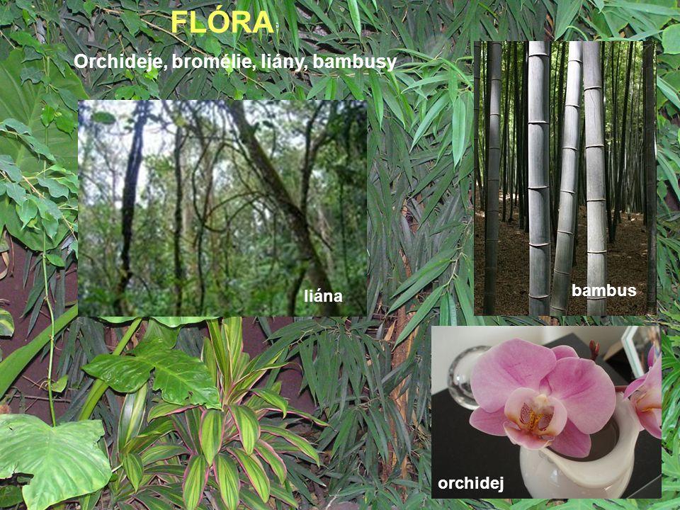 FLÓRA Orchideje, bromélie, liány, bambusy liána orchidej bambus