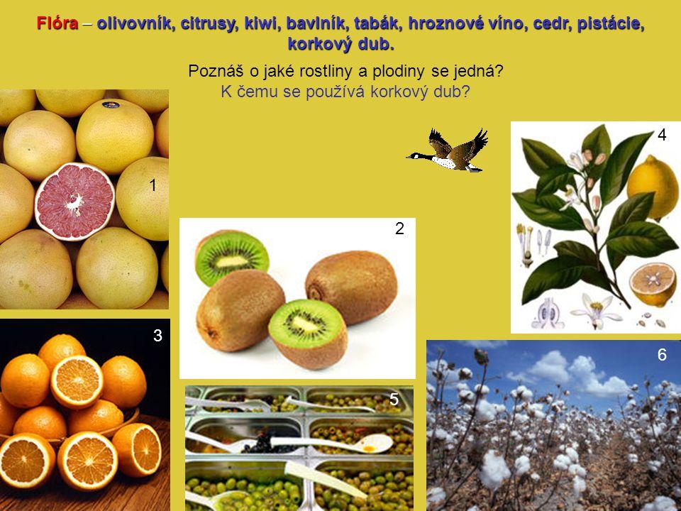 Flóra – olivovník, citrusy, kiwi, bavlník, tabák, hroznové víno, cedr, pistácie, korkový dub. Poznáš o jaké rostliny a plodiny se jedná? K čemu se pou