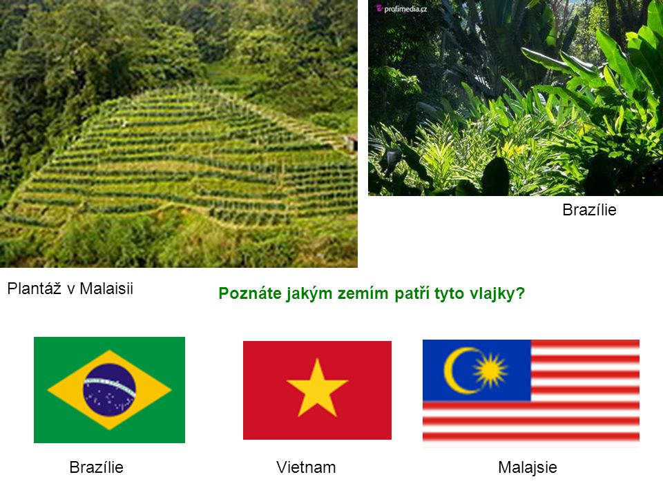 Plantáž v Malaisii Poznáte jakým zemím patří tyto vlajky? Brazílie Vietnam Malajsie Brazílie