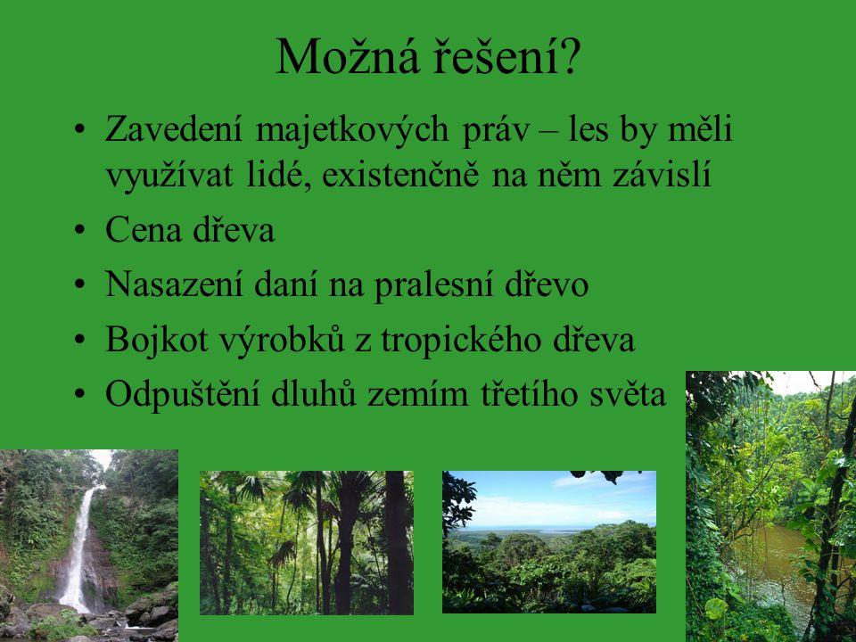 Možná řešení? Zavedení majetkových práv – les by měli využívat lidé, existenčně na něm závislí Cena dřeva Nasazení daní na pralesní dřevo Bojkot výrob