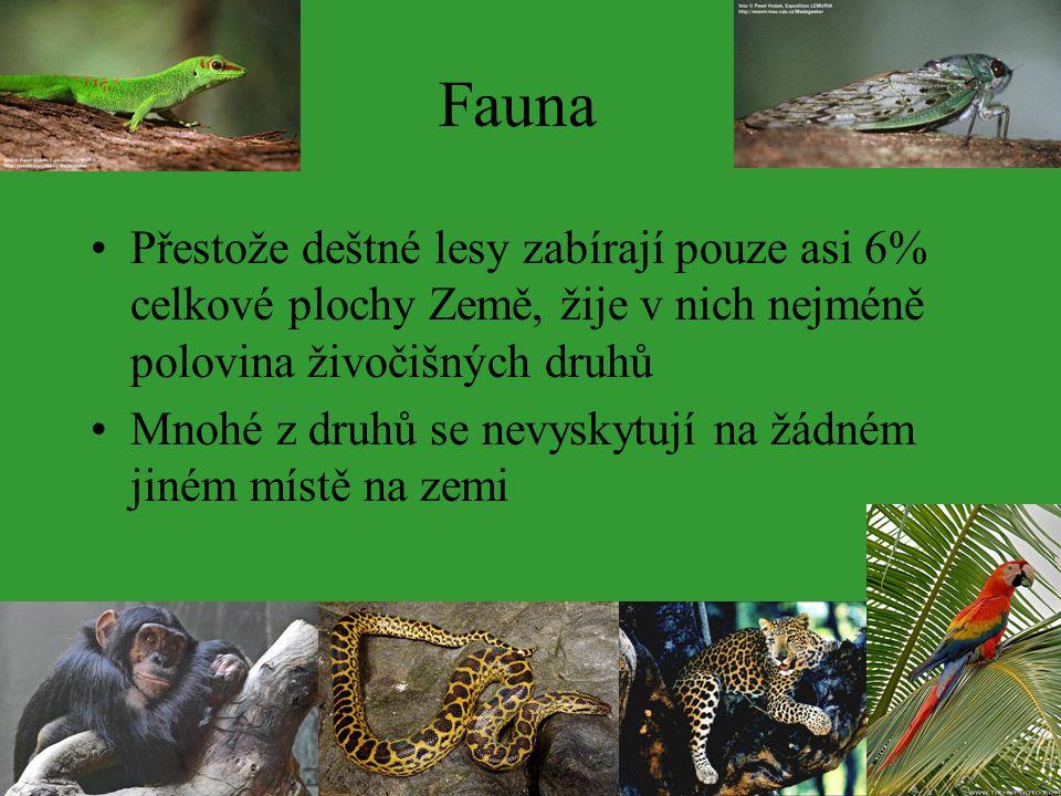 Fauna Přestože deštné lesy zabírají pouze asi 6% celkové plochy Země, žije v nich nejméně polovina živočišných druhů Mnohé z druhů se nevyskytují na ž