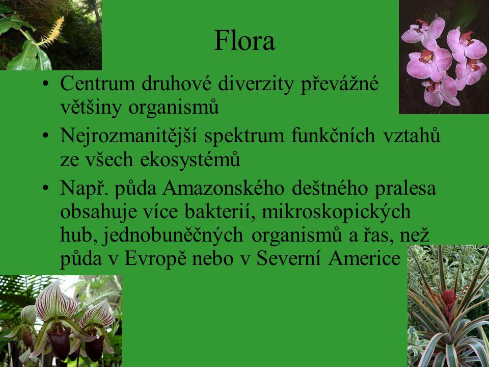 Flora Centrum druhové diverzity převážné většiny organismů Nejrozmanitější spektrum funkčních vztahů ze všech ekosystémů Např. půda Amazonského deštné