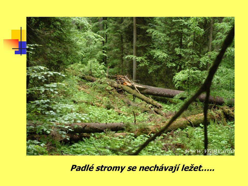 Padlé stromy se nechávají ležet…..