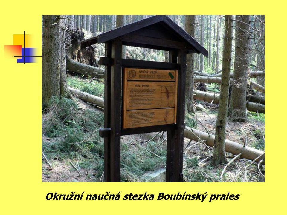 Okružní naučná stezka Boubínský prales